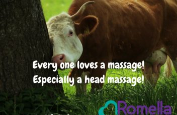Every one lloves a massage!Especially a head massage!